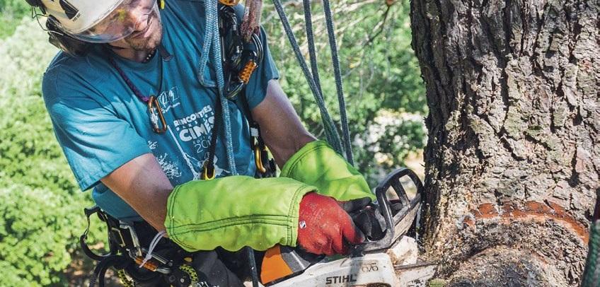 Кронирование деревьев альпинистами, услуги арбориста в Киеве